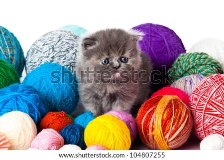 kitten with balls of threads.  little kitten on white background. persian kitten