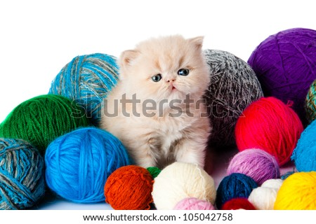 kitten with balls of threads. little kitten on white background. persian kitten