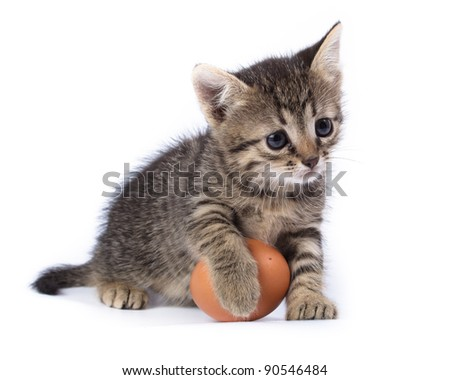 Kitten with egg in front of white background, isolated. The photo is made in studio. Russia, the Ryazan region (Ryazanskaya oblast), the Pronsky District, Denisovo.
