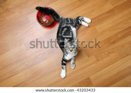 Kitten with food