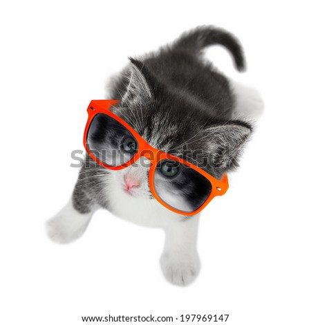 Kitten with glasses looking up on white background.