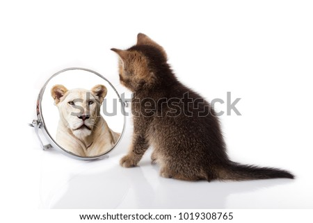 kitten with mirror on white background. kitten looks in a mirror reflection of a lion #1019308765