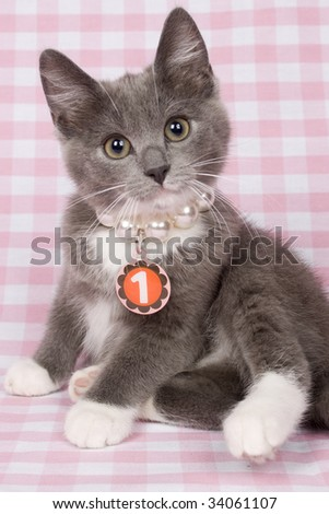 kitten with neckless with number 1 on it.