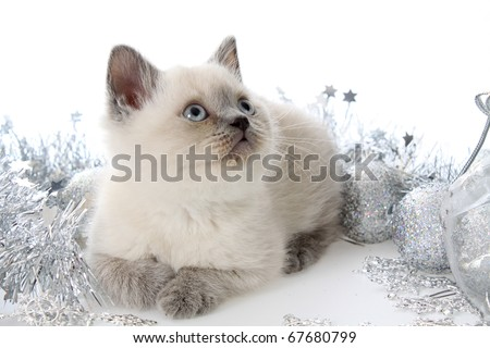 Kitten with New Year's toys and gifts on a white background.