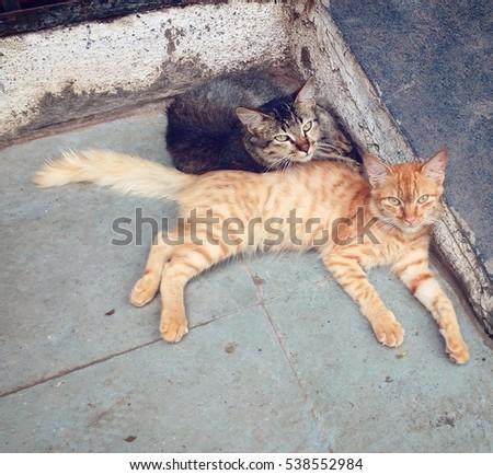 Kittens #538552984