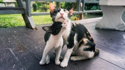 Kittens and mother cat lovely