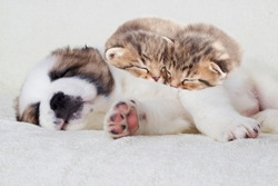 kittens and puppy sleeping