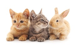 Kittens and rabbit on a white background.