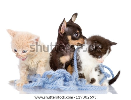 kittens and the puppy dog. isolated on white background