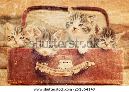 Kittens are sitting in vintage suitcase on a wooden background. Vintage image