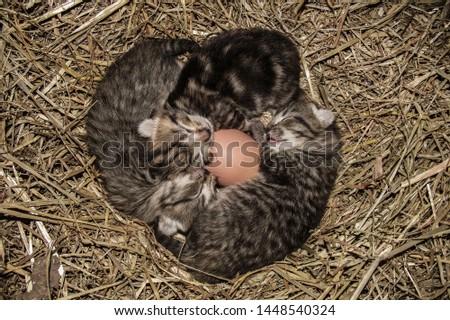 Kittens cuddling in chicken coop #1448540324