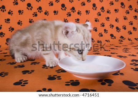 Kittens drinking milk from saucer on orange background with pawprints