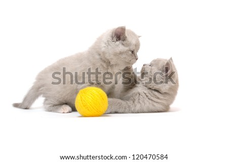 kittens game - stock photo