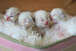kittens in a basket being sweet