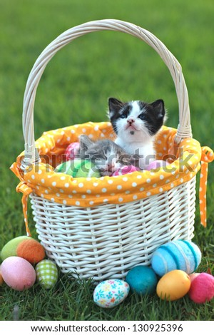 Kittens in a Holiday Easter Basket With Eggs