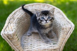 Kittens in a whicker chair outside