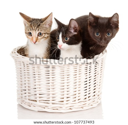 Kittens in basket. isolated on white background