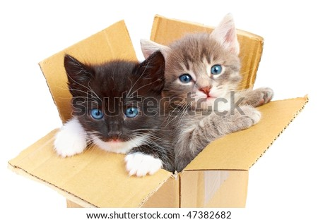 kittens in box isolated on white background