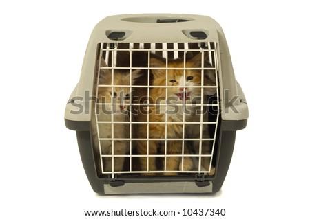 Kittens in transport box on white background