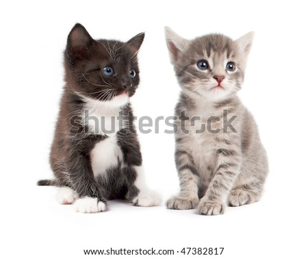 kittens isolated on white background