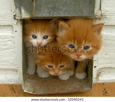 Kittens looking out of their house