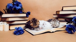 Kittens on the background of books are played and lie on the book. Old books and blue flowers isolated on beige craft background. Literary decorations.