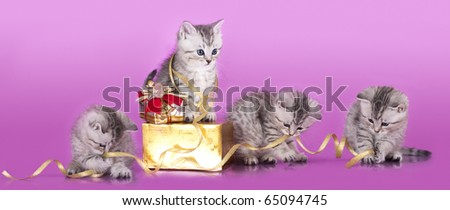 kittens packed holiday gift and attach the gold ribbon