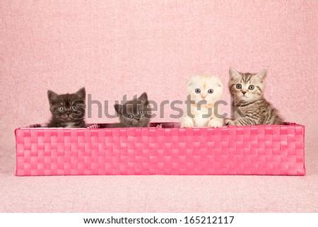 Kittens sitting inside long pink woven basket on pink background