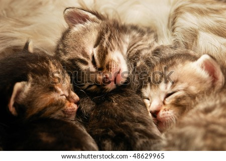 Kittens sleep