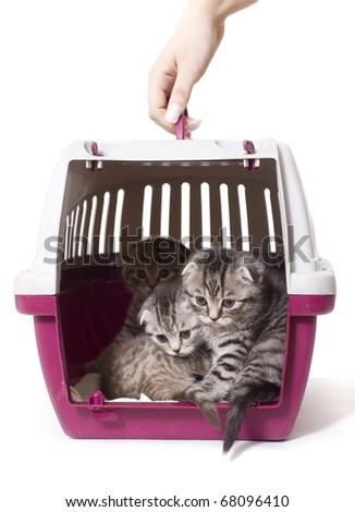 kitties in basket for carrying