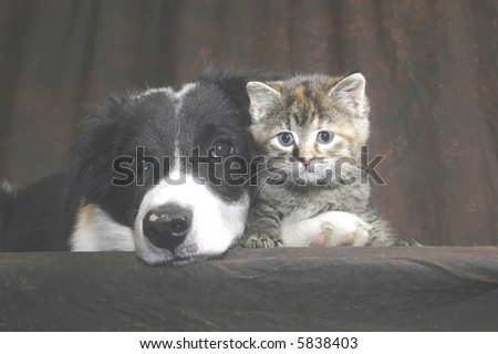 kitty and pal