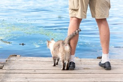 Kitty and pet owner on wooden deck or pier by river, lake or pond. Domestic animal with person, friendship of devoted kitty and human. Resting outside by water, nature scenery, tranquil landscape