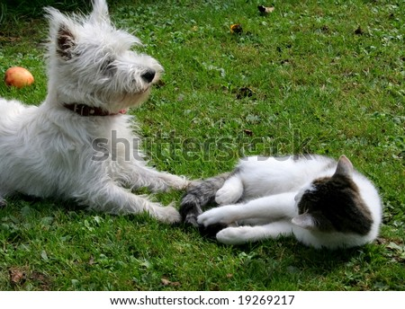 Kitty and terrier on a grass