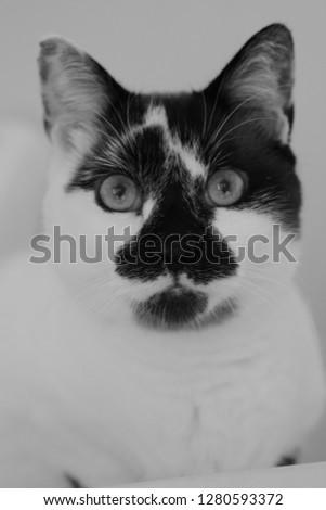 Kitty Cat pic