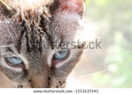 Kitty kitty cat #1353635945