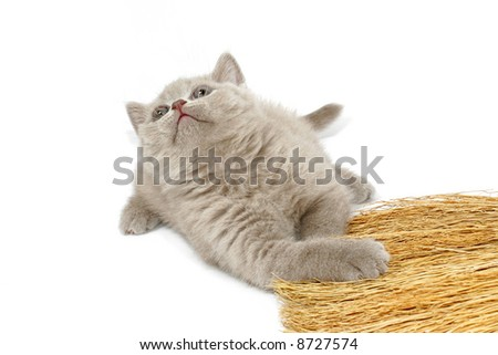 Kitty of the mauve color look upwards - stock photo