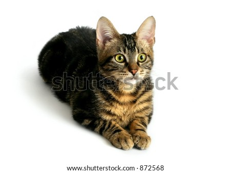 Kitty on white background