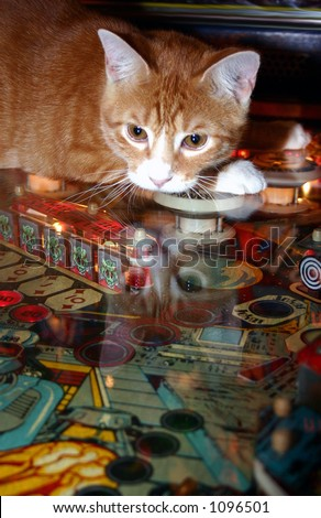 kitty pinball