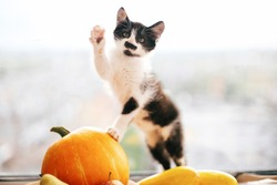 Kitty sitting on pumpkin and playing in light and zucchini, apples and pears on wood. Happy Thanksgiving and Halloween. Harvest and hello autumn concept. Space for text