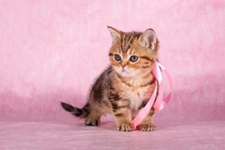 Kitty stands on a pink background
