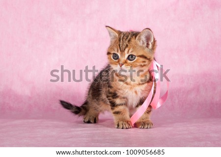 Kitty stands on a pink background - Shutterstock ID 1009056685