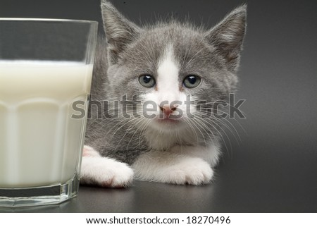 kitty white a glass of milk looking