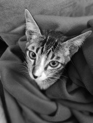 kittycat black white