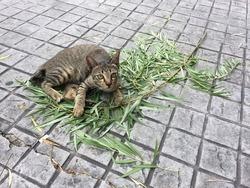 Kittycat with bamboo