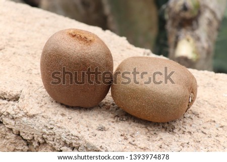 Kiwi fruit above a wall With it's brown beauty and scrumptious