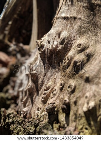 Knotty tree trunk in the forest. #1433854049
