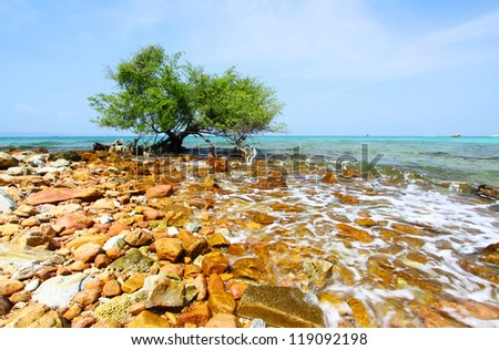 Koh larn pattaya thailand ,the tree on sea