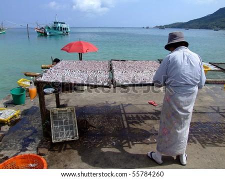 KOH PHANGAN, THAILAND - JANUARY 4: Thai woman prepares fresh squid by the ocean on January 4, 2005 in Koh Phangan.
