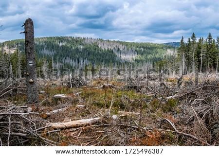 Kohut hill, Stolica mountains, Slovak republic. Forest calamity theme. Seasonal natural scene. Zdjęcia stock ©
