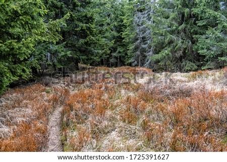 Kohut hill, Stolica mountains, Slovak republic. Seasonal natural scene. Zdjęcia stock ©